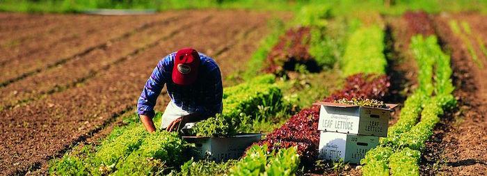 Lavoro in agricoltura